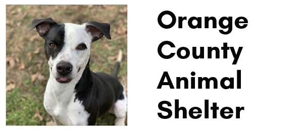 Image of black and white dog and the words Orange County Animal Shelter